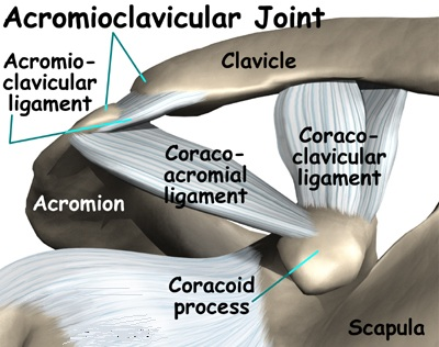 Articular Disc of Acromioclavicular Joint