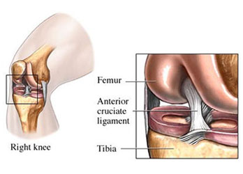 Anterior Cruciate Ligament Location