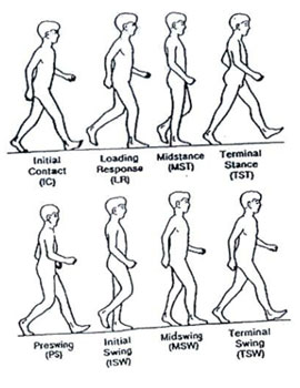 Different Phases of Gait